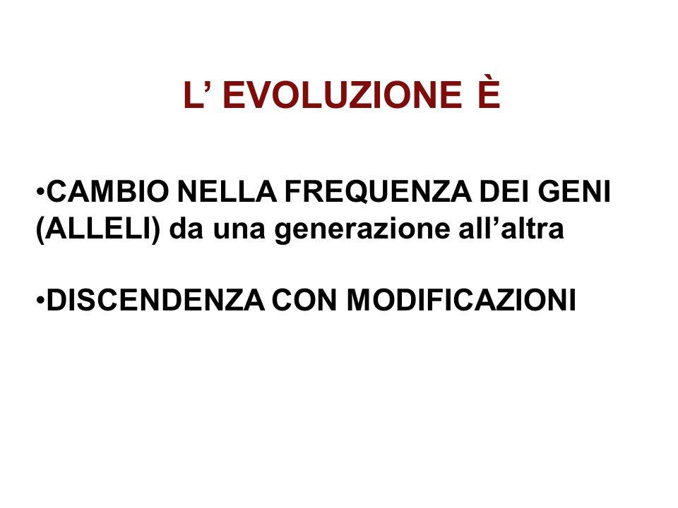 L' EVOLUZIONE È CAMBIO NELLA FREQUENZA DEI GENI (ALLELI) da una generazione all'altra.