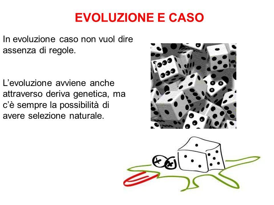 EVOLUZIONE E CASO In evoluzione caso non vuol dire assenza di regole.
