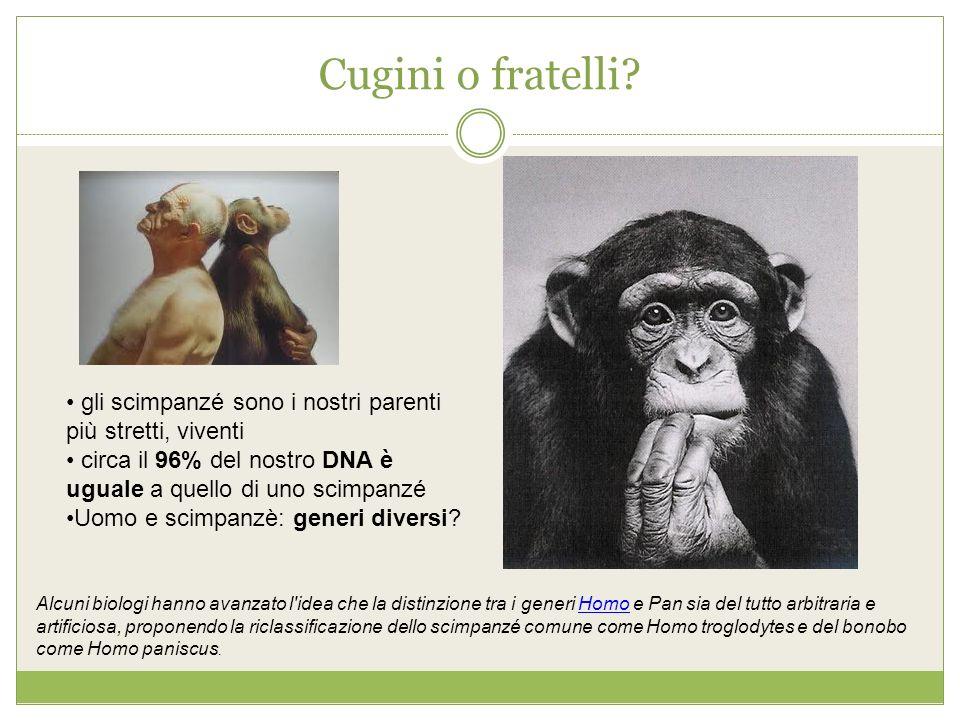 Cugini o fratelli gli scimpanzé sono i nostri parenti più stretti, viventi. circa il 96% del nostro DNA è uguale a quello di uno scimpanzé.