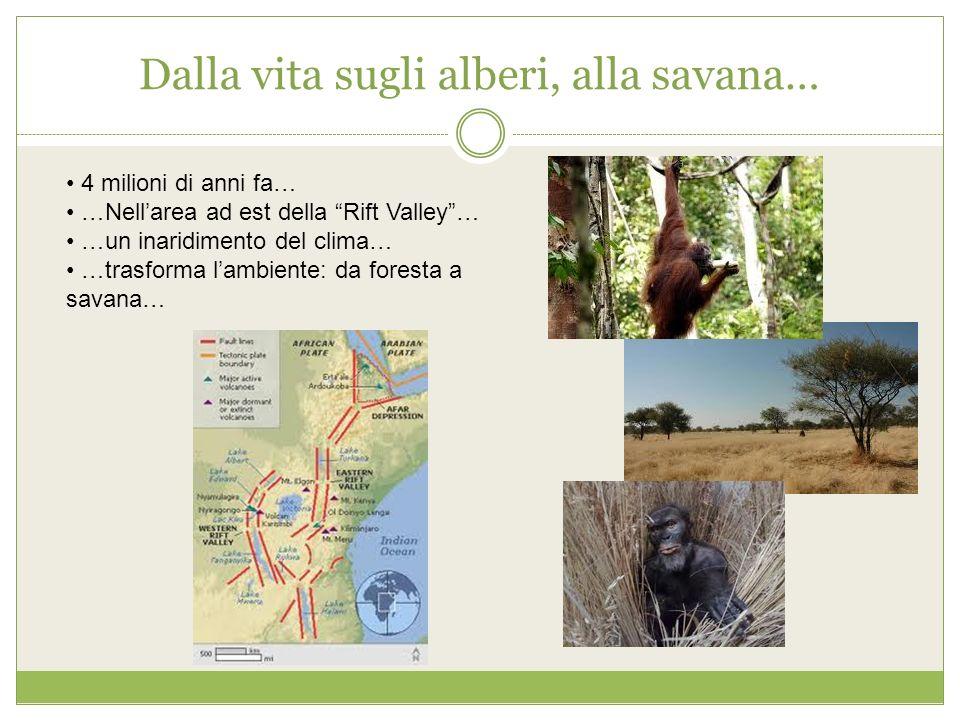 Dalla vita sugli alberi, alla savana…