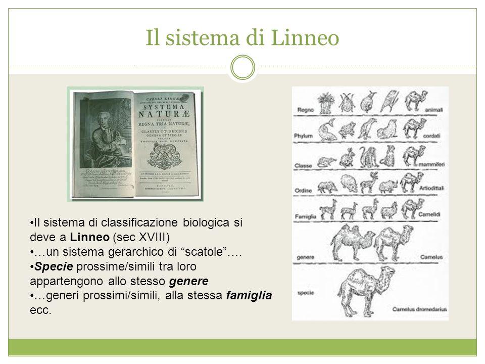 Il sistema di Linneo Il sistema di classificazione biologica si deve a Linneo (sec XVIII) …un sistema gerarchico di scatole ….