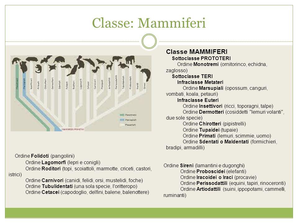 Classe: Mammiferi