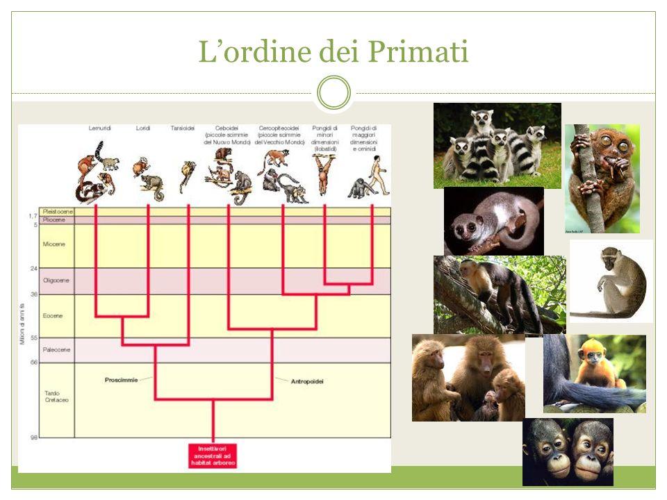 L'ordine dei Primati
