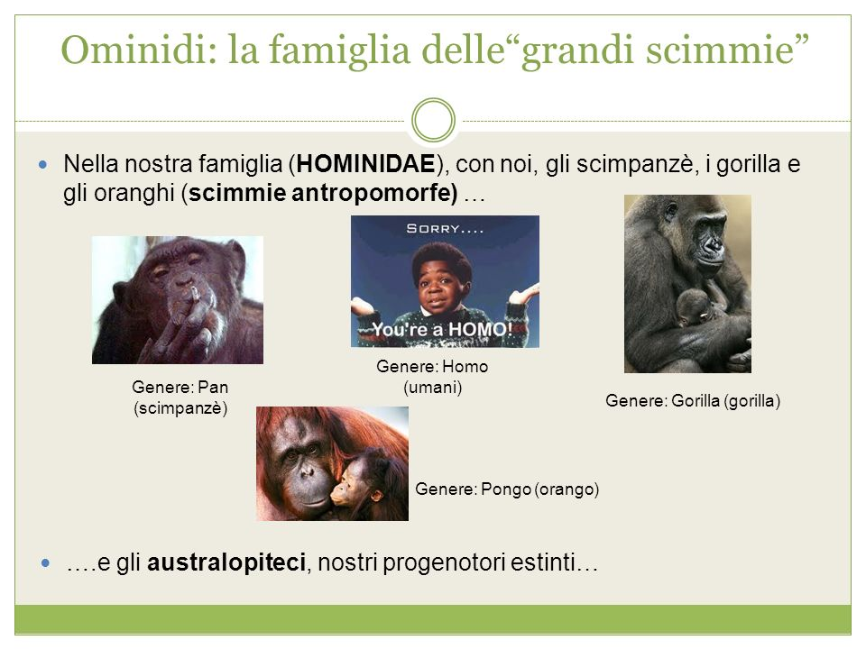 Ominidi: la famiglia delle grandi scimmie