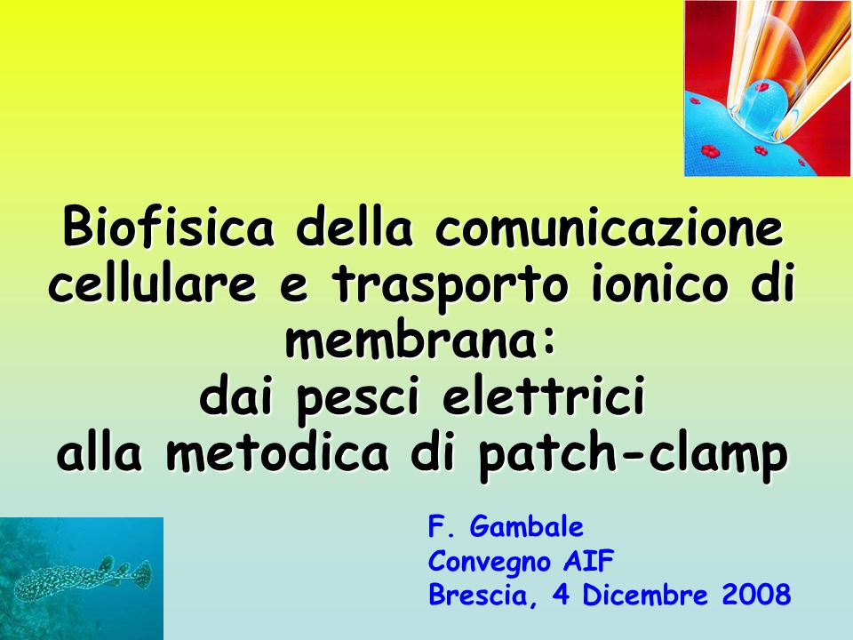 alla metodica di patch-clamp