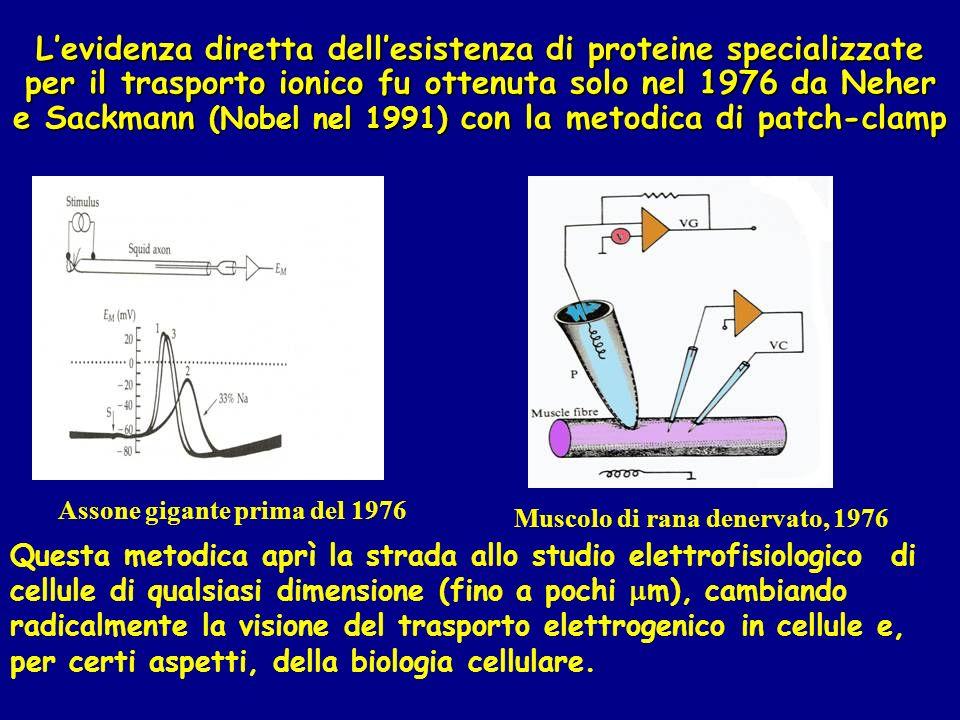 L'evidenza diretta dell'esistenza di proteine specializzate per il trasporto ionico fu ottenuta solo nel 1976 da Neher e Sackmann (Nobel nel 1991) con la metodica di patch-clamp