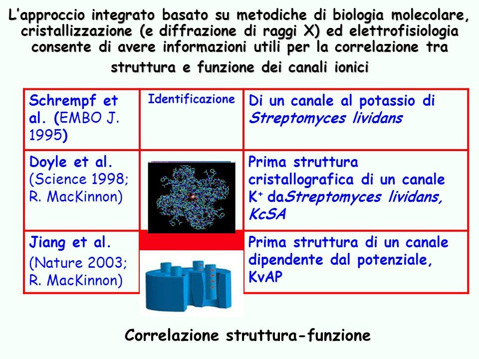 Correlazione struttura-funzione