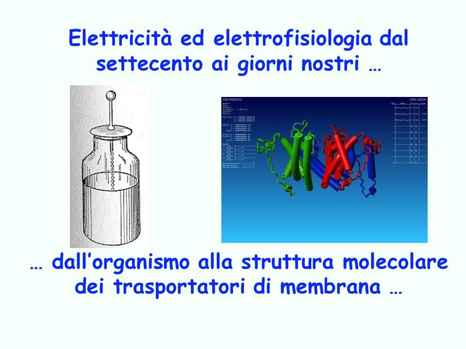 Elettricità ed elettrofisiologia dal settecento ai giorni nostri …