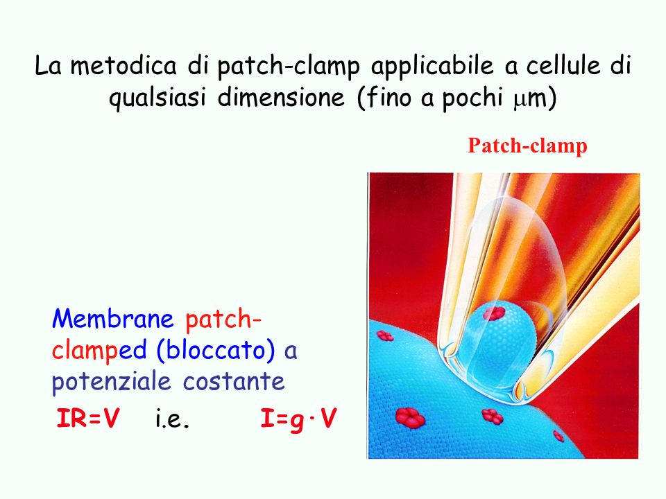 Membrane patch- clamped (bloccato) a potenziale costante