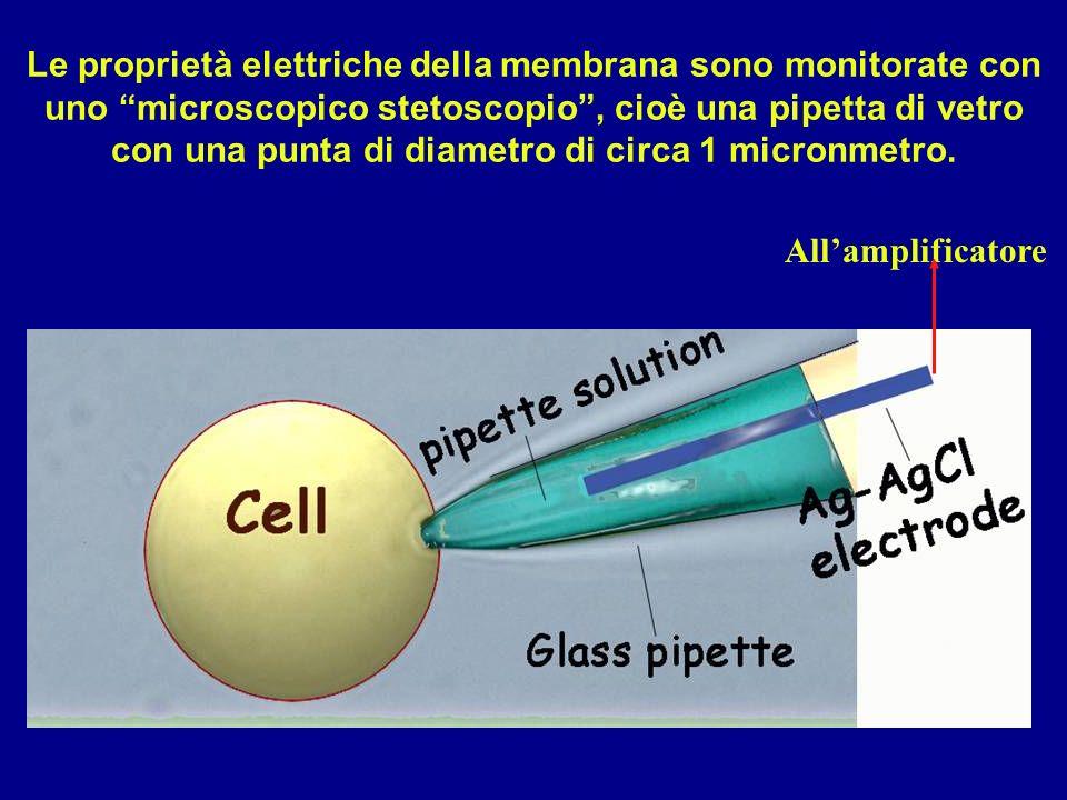 Le proprietà elettriche della membrana sono monitorate con uno microscopico stetoscopio , cioè una pipetta di vetro con una punta di diametro di circa 1 micronmetro.