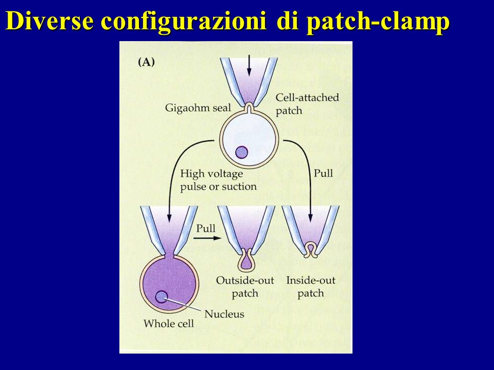 Diverse configurazioni di patch-clamp