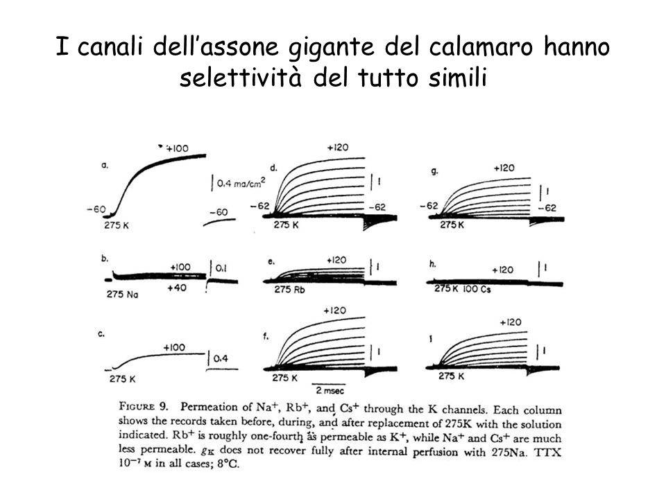 I canali dell'assone gigante del calamaro hanno selettività del tutto simili