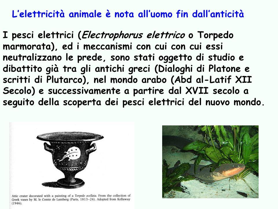 L'elettricità animale è nota all'uomo fin dall'anticità