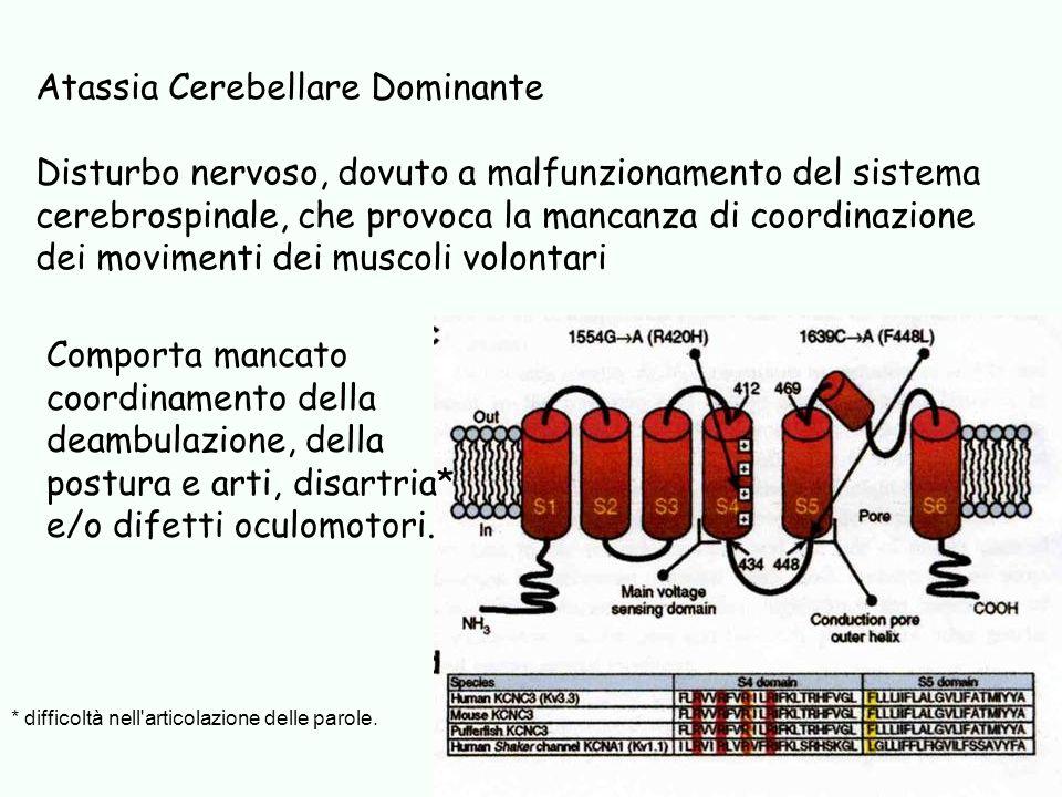 Atassia Cerebellare Dominante