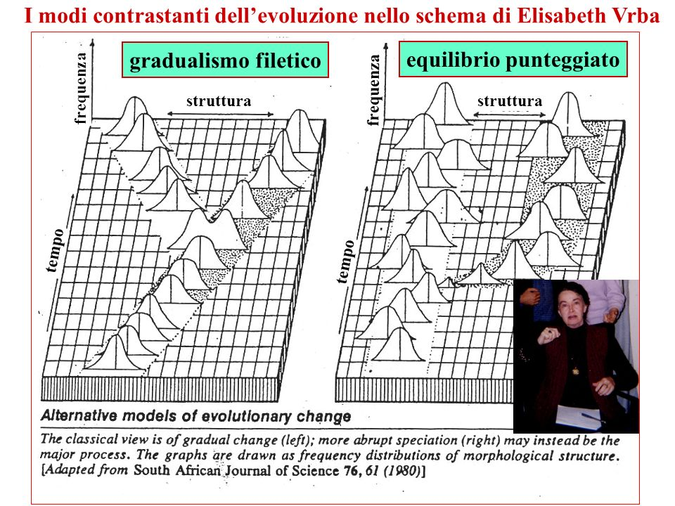 I modi contrastanti dell'evoluzione nello schema di Elisabeth Vrba