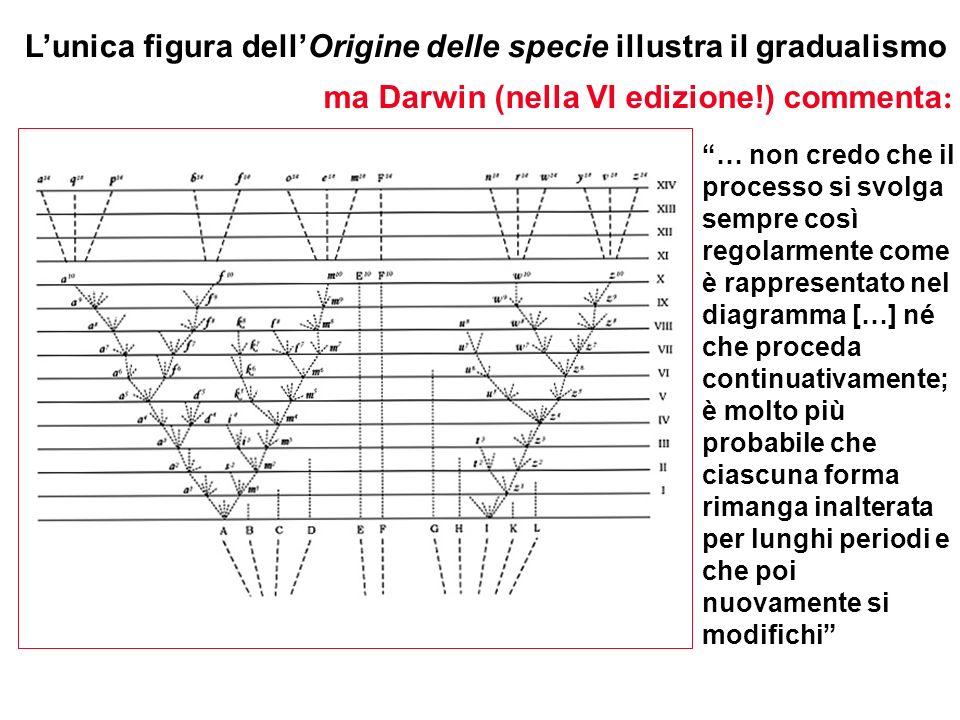 L'unica figura dell'Origine delle specie illustra il gradualismo