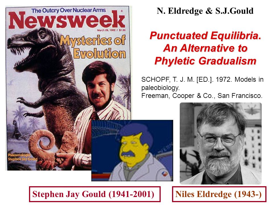 Punctuated Equilibria. An Alternative to Phyletic Gradualism