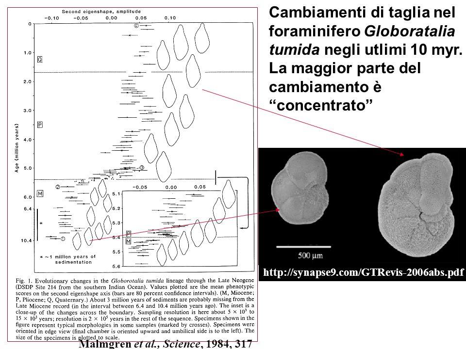 Cambiamenti di taglia nel foraminifero Globoratalia tumida negli utlimi 10 myr. La maggior parte del cambiamento è concentrato