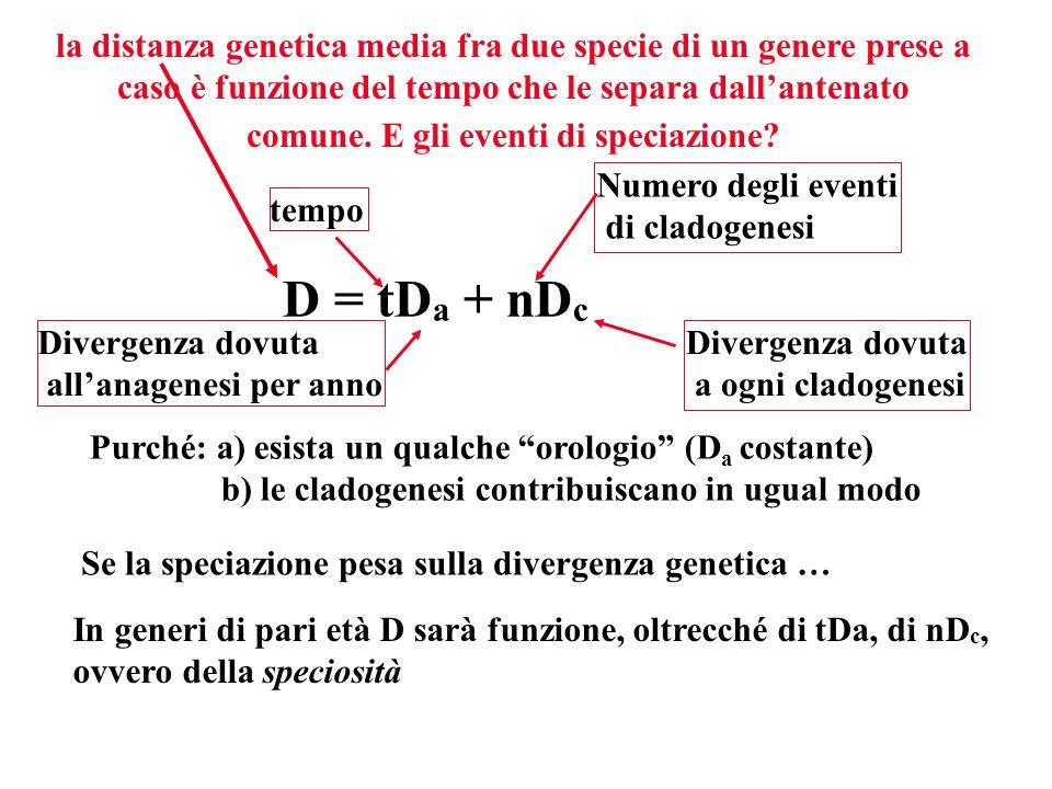 la distanza genetica media fra due specie di un genere prese a caso è funzione del tempo che le separa dall'antenato comune. E gli eventi di speciazione