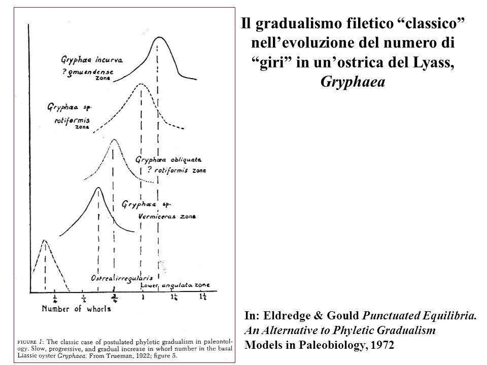 Il gradualismo filetico classico nell'evoluzione del numero di giri in un'ostrica del Lyass, Gryphaea