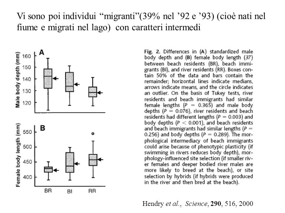 Vi sono poi individui migranti (39% nel '92 e '93) (cioè nati nel fiume e migrati nel lago) con caratteri intermedi