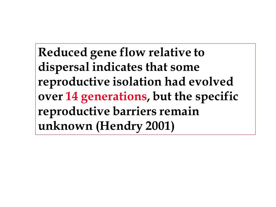 Reduced gene flow relative to dispersal indicates that some reproductive isolation had evolved over 14 generations, but the specific reproductive barriers remain unknown (Hendry 2001)