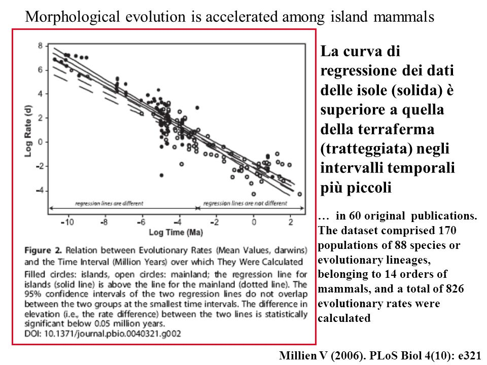 Morphological evolution is accelerated among island mammals