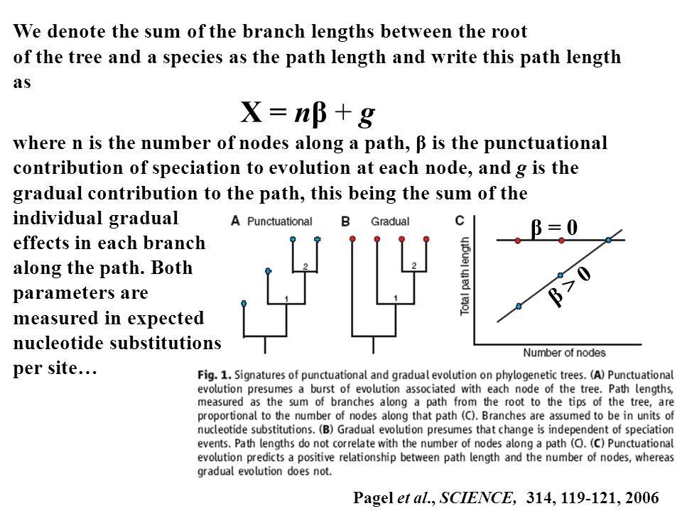 We denote the sum of the branch lengths between the root