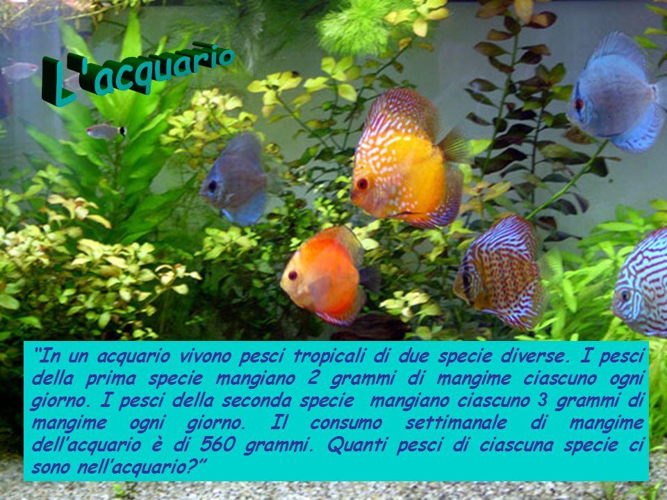 L acquario