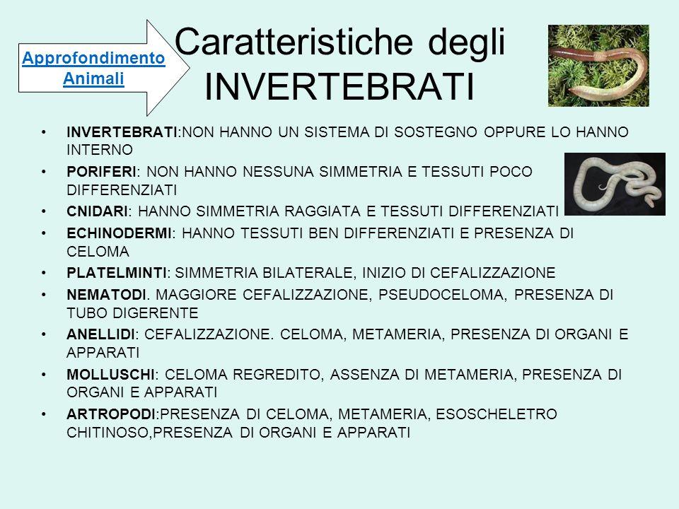 Caratteristiche degli INVERTEBRATI