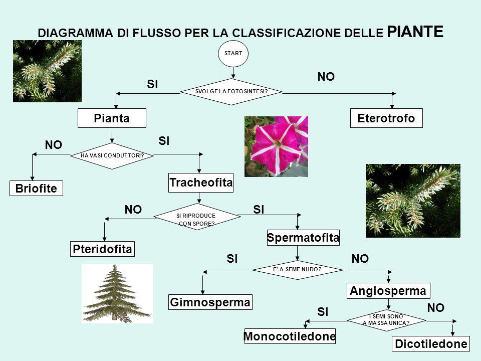 DIAGRAMMA DI FLUSSO PER LA CLASSIFICAZIONE DELLE PIANTE