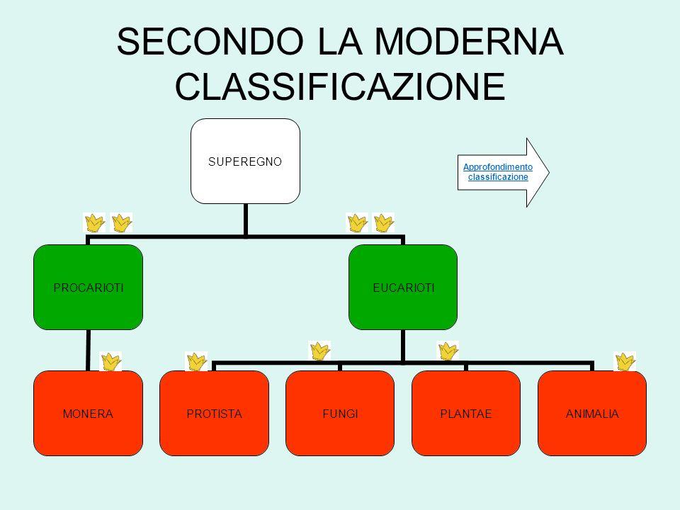 SECONDO LA MODERNA CLASSIFICAZIONE