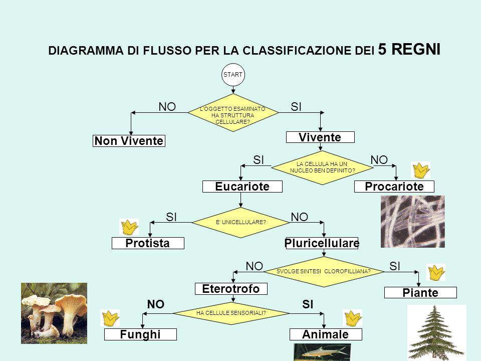 DIAGRAMMA DI FLUSSO PER LA CLASSIFICAZIONE DEI 5 REGNI