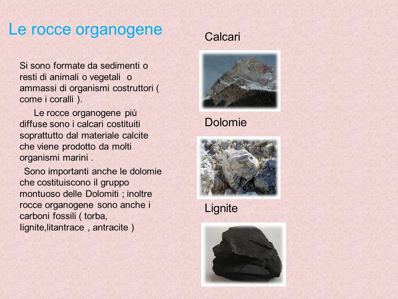 Le rocce organogene Calcari Dolomie Lignite
