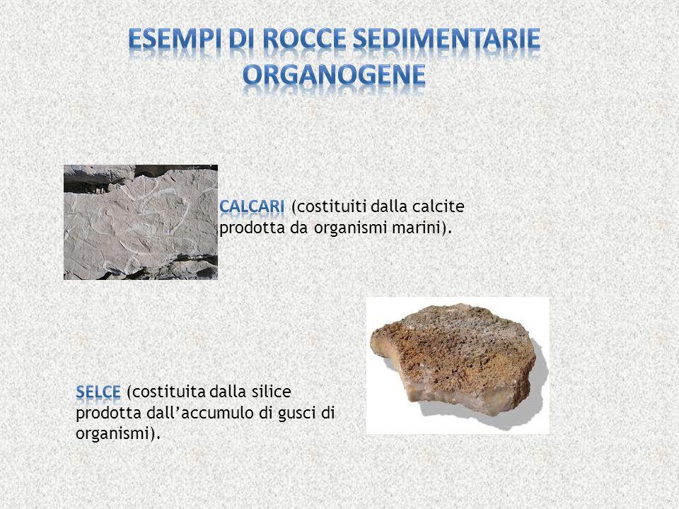 Esempi di rocce sedimentarie organogene