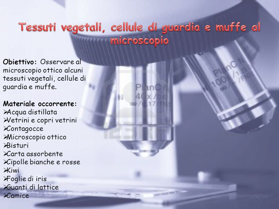 Tessuti vegetali, cellule di guardia e muffe al microscopio