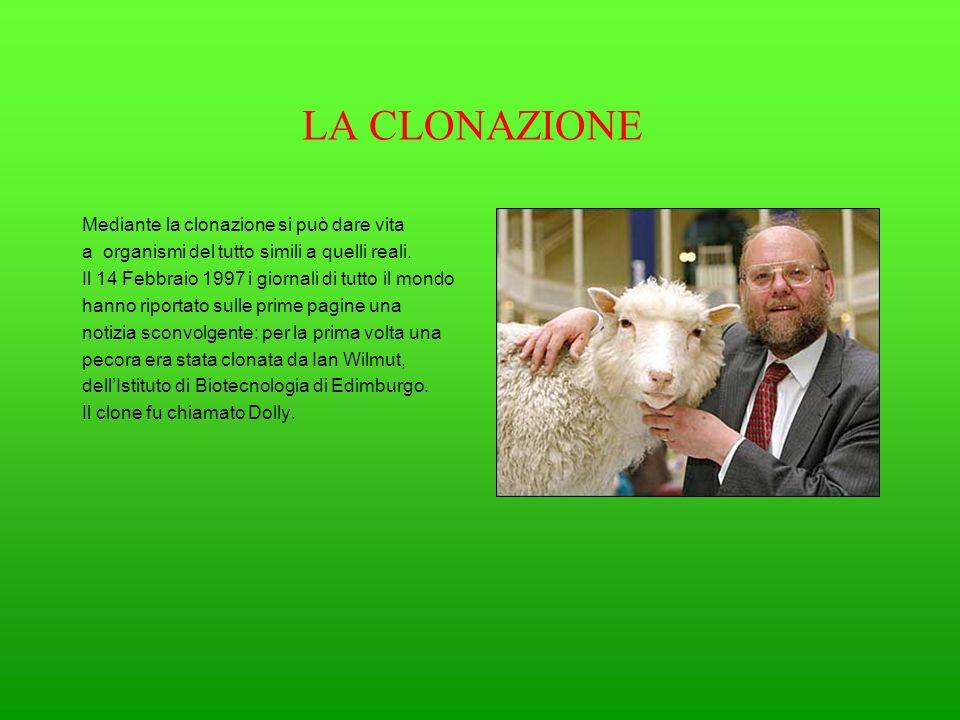 LA CLONAZIONE Mediante la clonazione si può dare vita