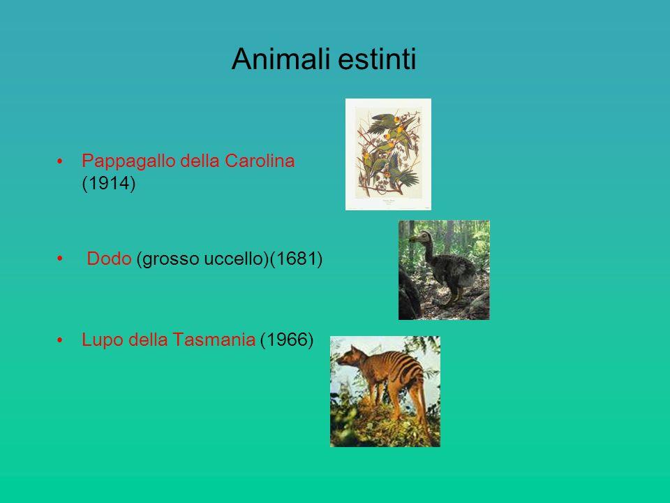 Animali estinti Pappagallo della Carolina (1914)