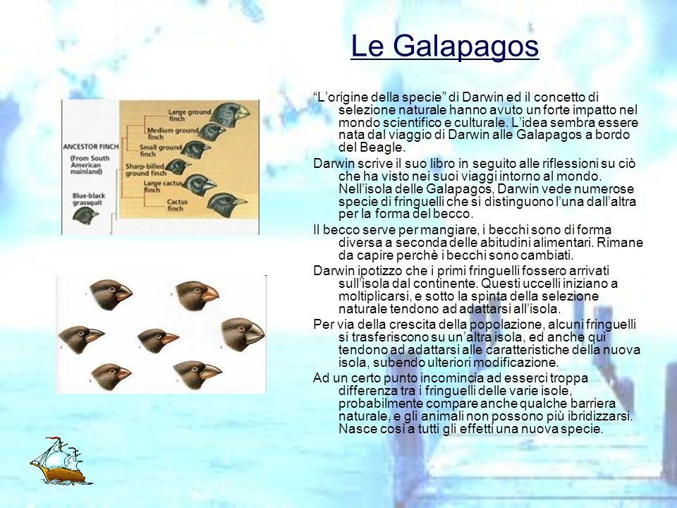 Le Galapagos