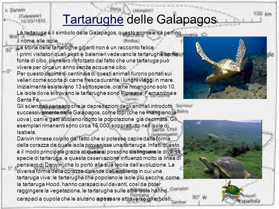 Tartarughe delle Galapagos