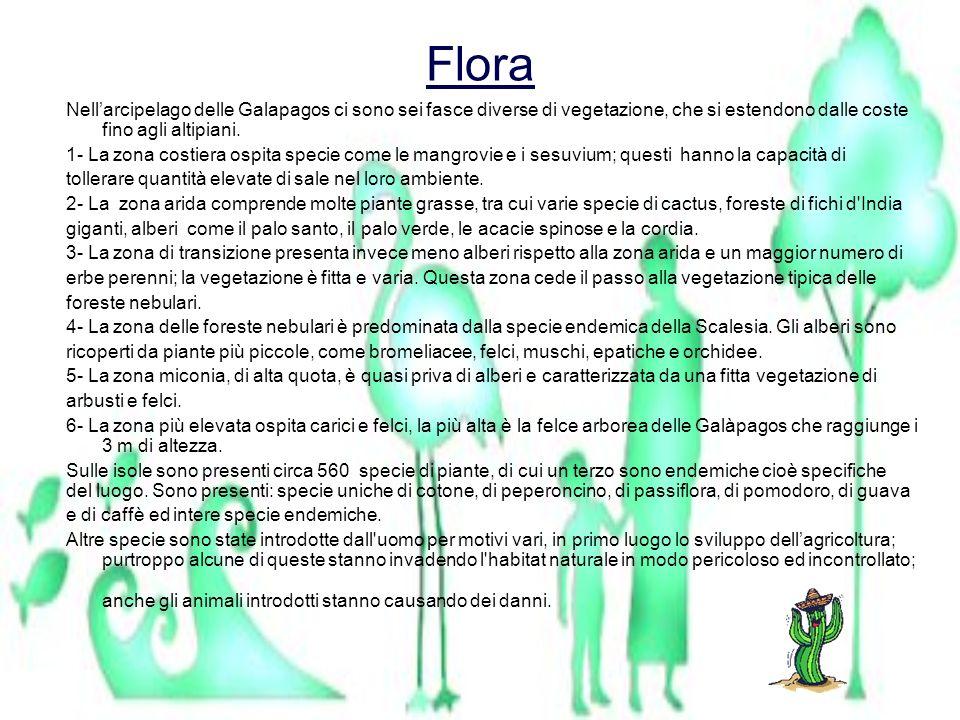 FloraNell'arcipelago delle Galapagos ci sono sei fasce diverse di vegetazione, che si estendono dalle coste fino agli altipiani.
