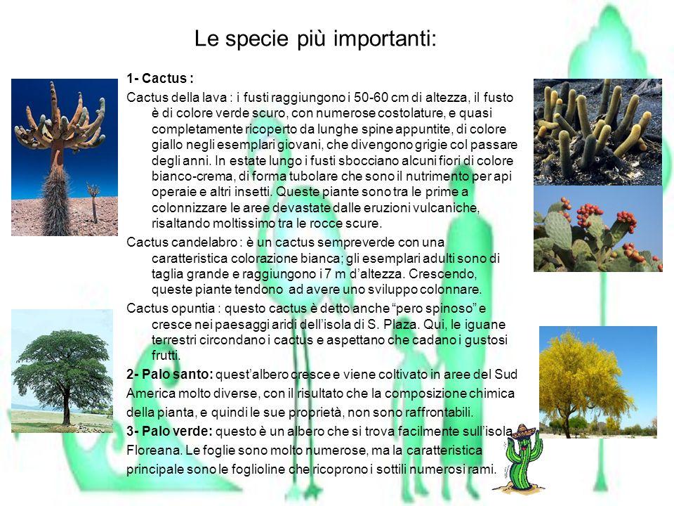 Le specie più importanti: