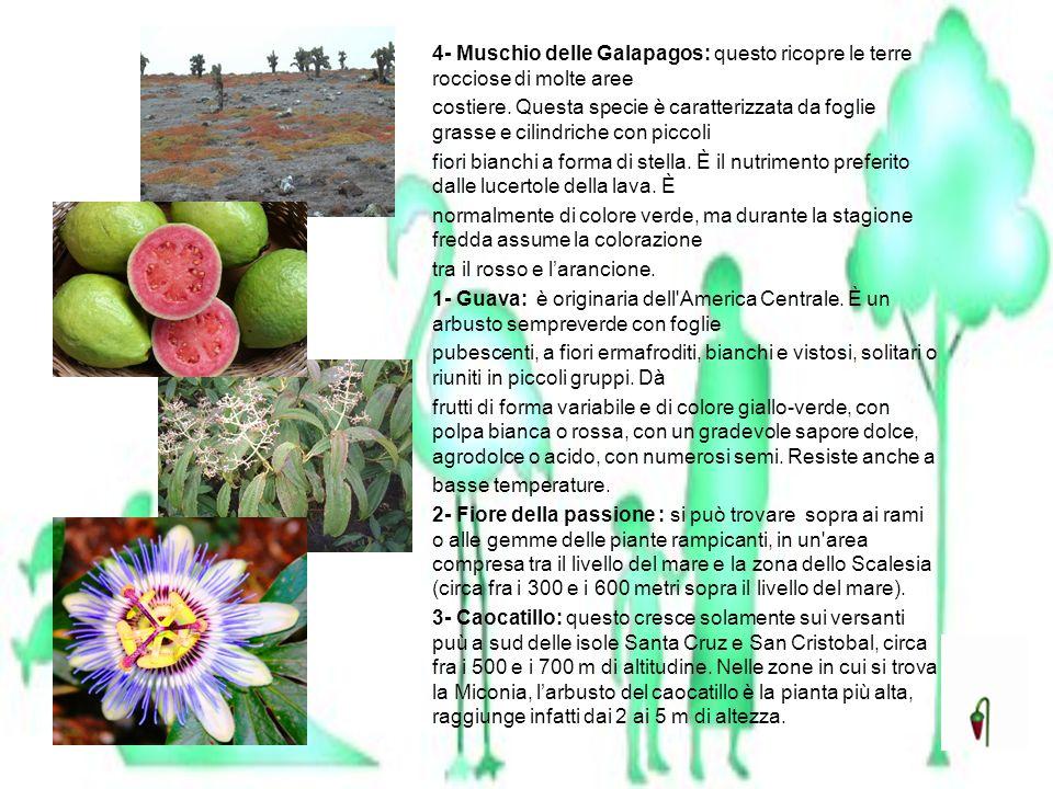 4- Muschio delle Galapagos: questo ricopre le terre rocciose di molte aree