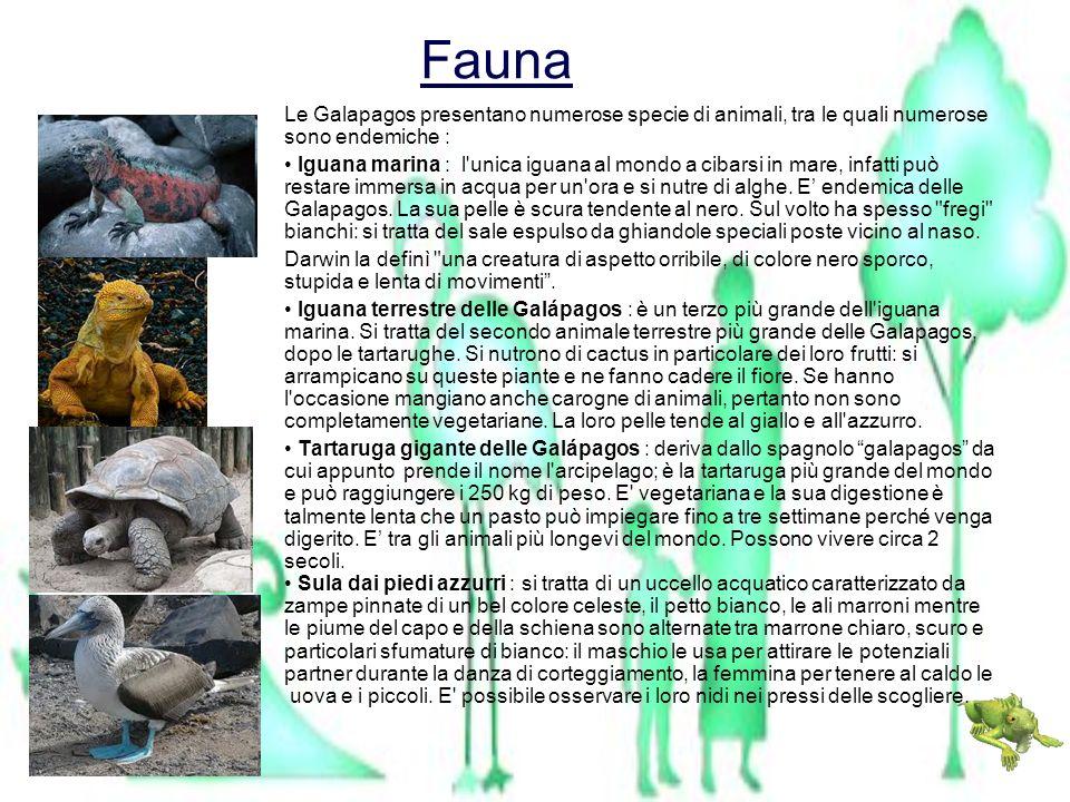 FaunaLe Galapagos presentano numerose specie di animali, tra le quali numerose sono endemiche :