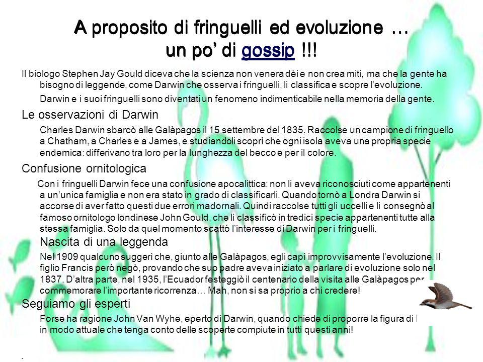 A proposito di fringuelli ed evoluzione … un po' di gossip !!!