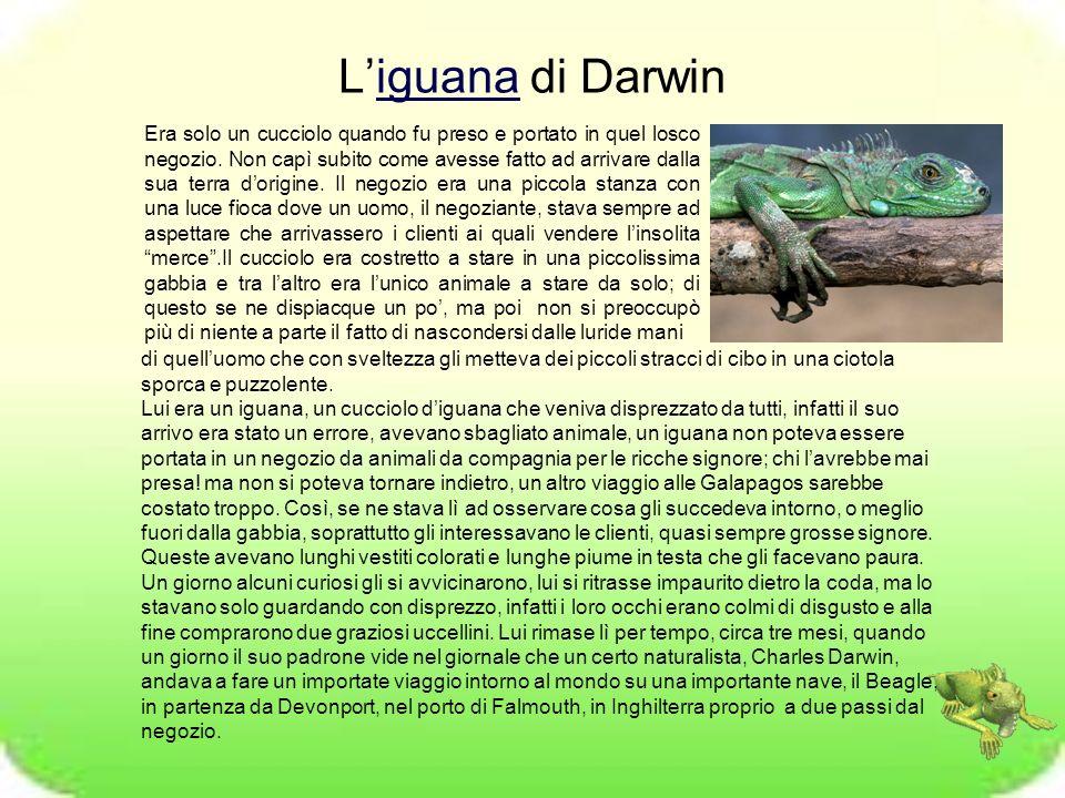 L'iguana di Darwin