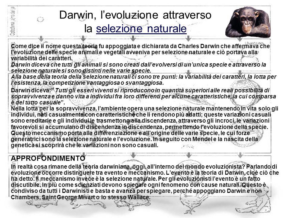 Darwin, l'evoluzione attraverso la selezione naturale