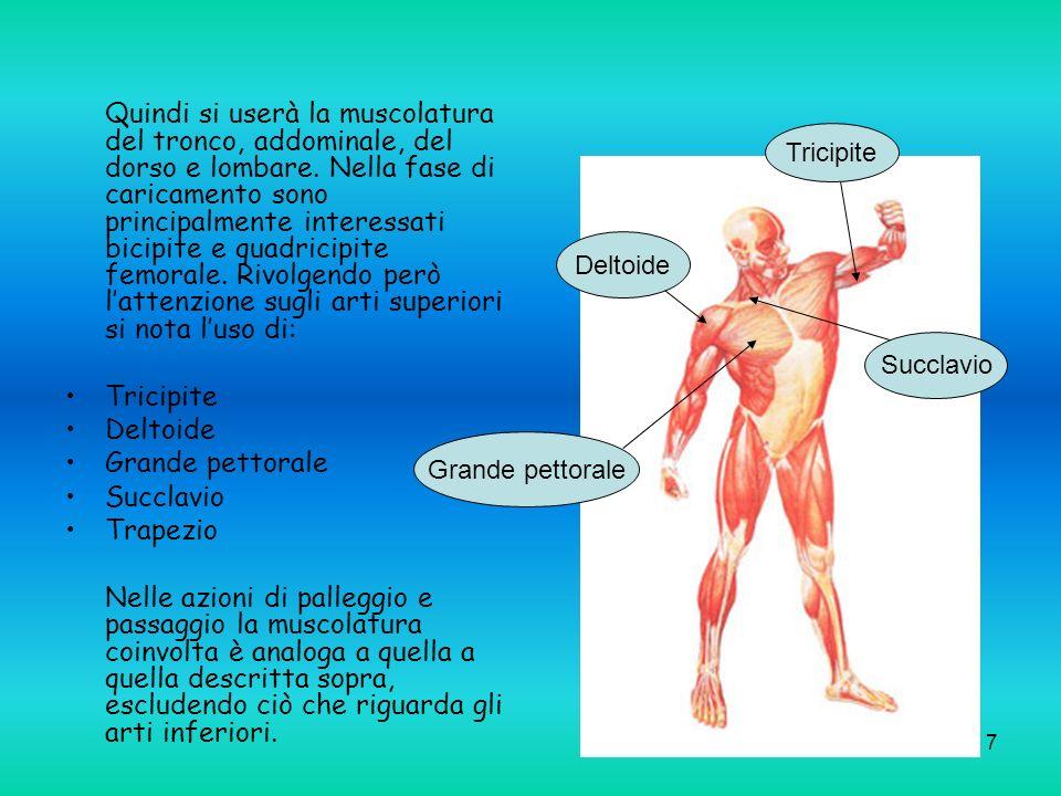 Quindi si userà la muscolatura del tronco, addominale, del dorso e lombare. Nella fase di caricamento sono principalmente interessati bicipite e quadricipite femorale. Rivolgendo però l'attenzione sugli arti superiori si nota l'uso di: