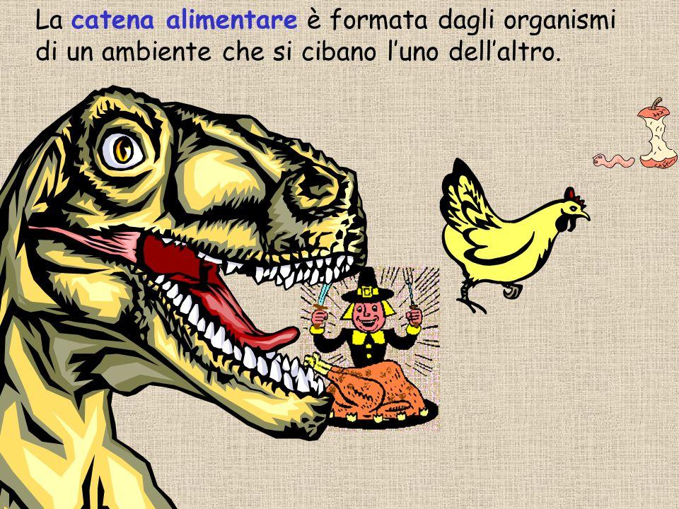 La catena alimentare è formata dagli organismi di un ambiente che si cibano l'uno dell'altro.
