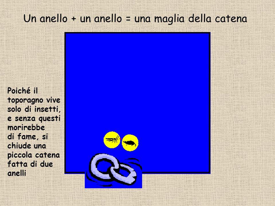 Un anello + un anello = una maglia della catena